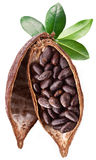 Cocoa pod Stock Images