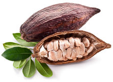 Cocoa pod. On a white background stock photo