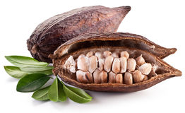 Cocoa pod Stock Photography
