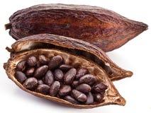 Cocoa pod Royalty Free Stock Photo