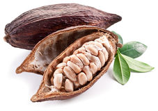 Cocoa pod royalty free stock photos
