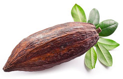 Cocoa pod stock image