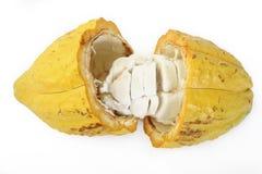 Cocoa pod. On white background Stock Photos