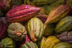 Cocoa pods royalty free stock photo