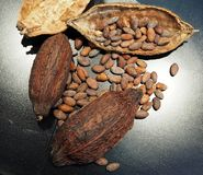 Cocoa pods and cocoa beans on a black metal plank under the spotlight.  royalty free stock photos