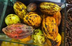 Cocoa pods Stock Photos