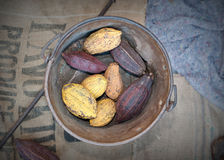 Cocoa pods Royalty Free Stock Images