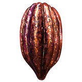 Cocoa pods on a white background Stock Image