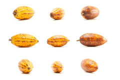 Cocoa Pods On White Royalty Free Stock Photography