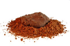 Cocoa powder Stock Image