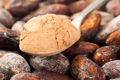 Cocoa powder and chocolate Stock Photography