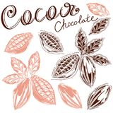 Cocoa set. Set of cocoa in loose hands with letting, cocoa and chocolate, cocoa bean, kako leaves, hand-drawn, white background, retro style, cocoa fruits Royalty Free Stock Images