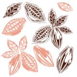 Cocoa set. Set of cocoa in styles free hands, cocoa bean, kako leaves, hand-drawn, white background, retro style, cocoa fruits Royalty Free Stock Images