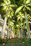 Cocoa tree at night Royalty Free Stock Image