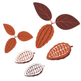 Cocoa. Vector illustration (EPS 10 Royalty Free Stock Images