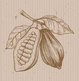Cocoa vector symbol. Vector illustration on beige Stock Images