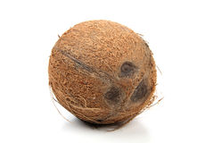 Cocoanut. Ripe big cocoanut on white background stock photography