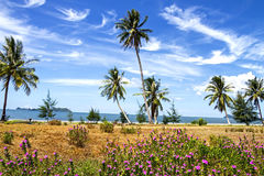 Cocoanut  and dry flora. Coconut  and dry flora with blue sky at beach Chumphon Province, Thailand Stock Image