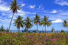 Cocoanut  and flower. The coconut  and flower with blue sky at beach Chumphon Province, Thailand Royalty Free Stock Photography