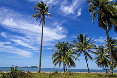 Cocoanut and withe cloud. Coconut and withe cloud with blue sky at beach Chumphon Province, Thailand stock photo