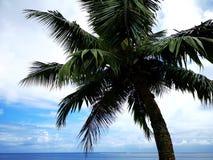 Cocobaum über dem Meer stockfotografie