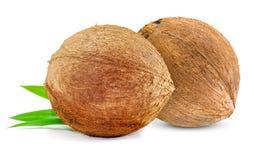 Cococnut isolerade på vit bakgrund arkivbilder