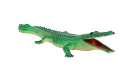 Cocodrile alligator Royalty Free Stock Photography