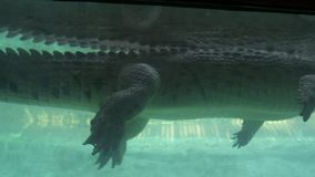 Cocodrilo que nada de la visión subacuática, escena del parque zoológico almacen de metraje de vídeo