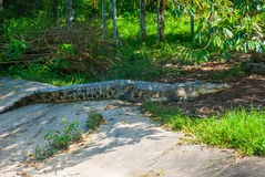Cocodrilos en la granja del cocodrilo sarawak borneo malasia Foto de archivo