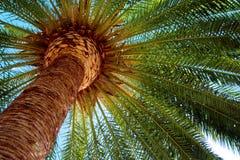 Cocoen gömma i handflatan Royaltyfri Fotografi