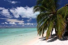 Cocoen gömma i handflatan på den vita sandiga stranden Royaltyfri Foto