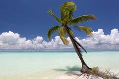 Cocoen gömma i handflatan på lagunstranden för blått vatten Arkivbilder