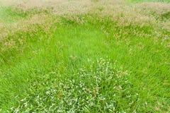 cocograssgräsmutter Arkivbild