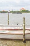 Cocoi Heron over Pier Royalty Free Stock Photo
