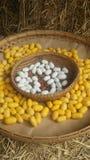 Cocon de ver à soie Photographie stock libre de droits