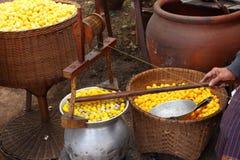 Cocon en soie Photographie stock libre de droits
