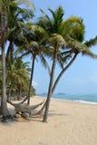 Coconat beach. Stock Photo