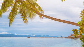 Coconat Palm on Kri Island, Homestay and Pier in Background. Raja Ampat, Indonesia, West Papua.  Royalty Free Stock Images