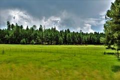 Coconino Nationaal Bos, het Nationale Bos van Verenigde Staten, Verenigde Staten royalty-vrije stock foto's