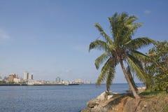 Coconot tree in Havana City bay entrance Stock Photo