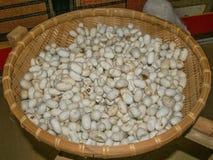Cocons de ver à soie au panier en osier photos stock