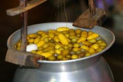 Cocons en soie Photographie stock libre de droits