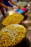 Cocons en soie Images stock