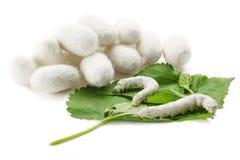 Cocons en soie avec le ver à soie Photographie stock libre de droits