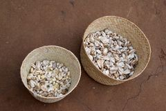 Cocons en soie, Madagascar Image stock
