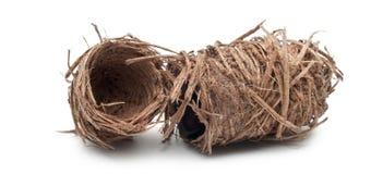 Cocons van Rode palmgraanklander Royalty-vrije Stock Foto's