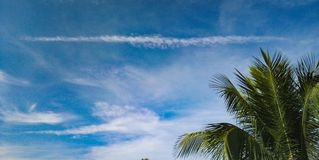 Coconut​ leaves​ and​ blue​ sky. stock image