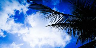 Coconut tree and blue sky. stock images