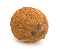Coconut. Safe coconut on isolated background Royalty Free Stock Images