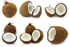 Coconut Royalty Free Stock Photo